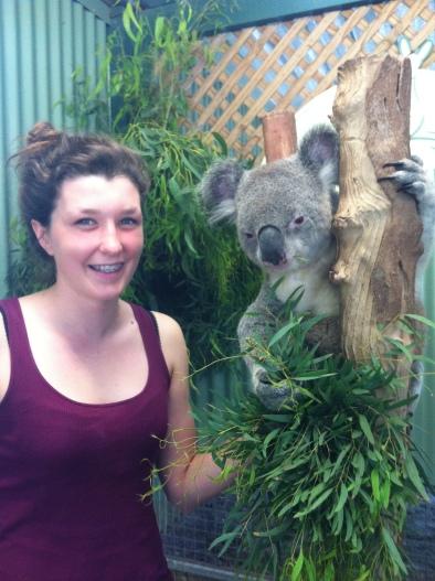 Koala in Australia :D